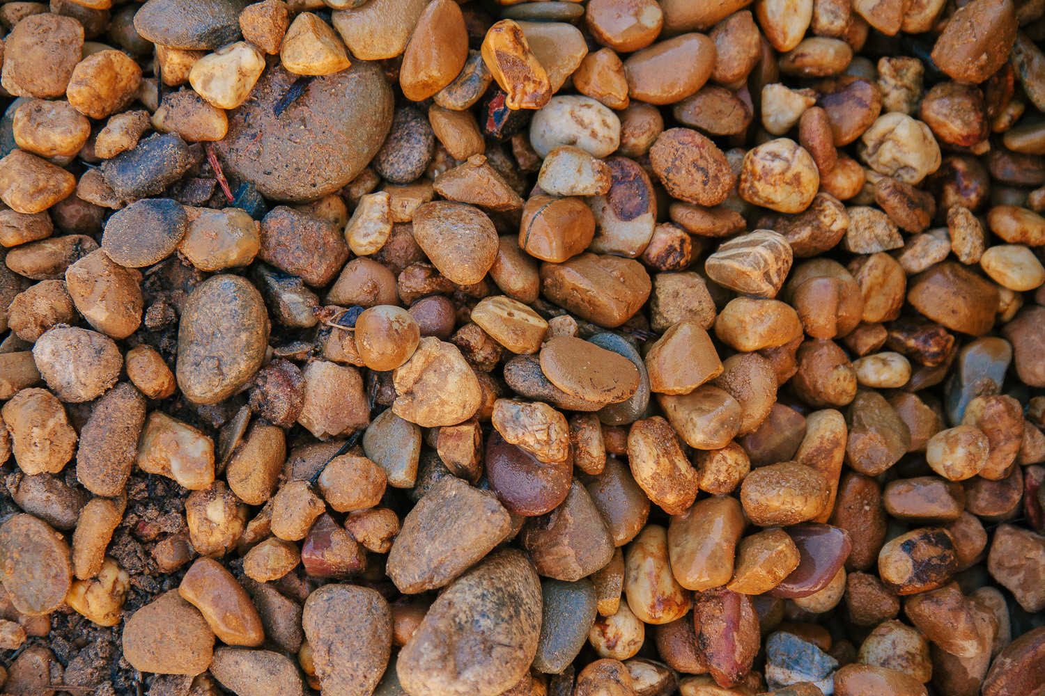 Golden brown pebbles sherwyn garden supplies for Landscaping rocks pebbles